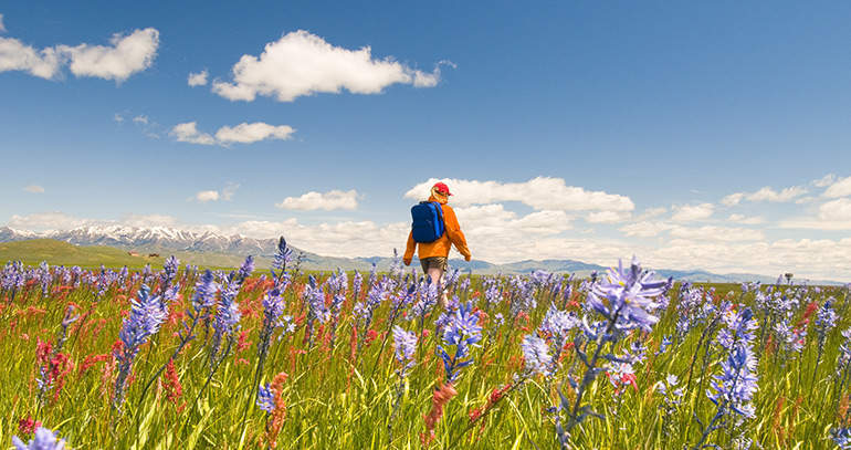 Superbloom In Southern Idaho