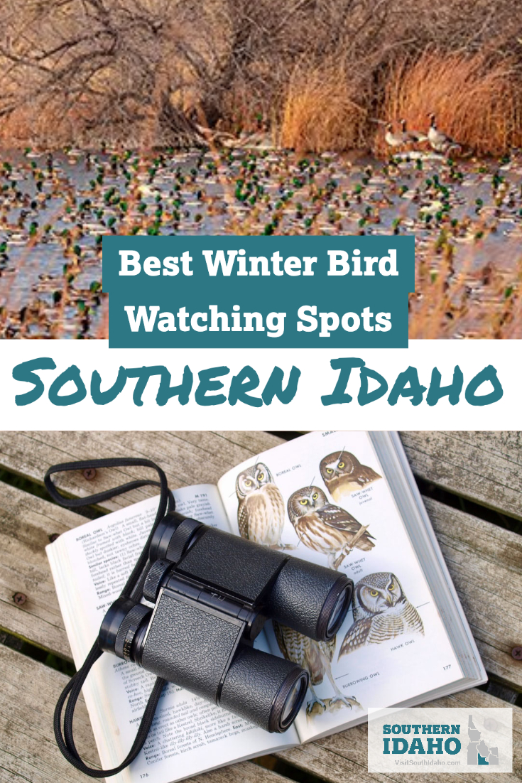 Don't miss these top winter bird watching spots in Southern Idaho! A few of these spots near Twin Falls include Hagerman and the City of Rocks.
